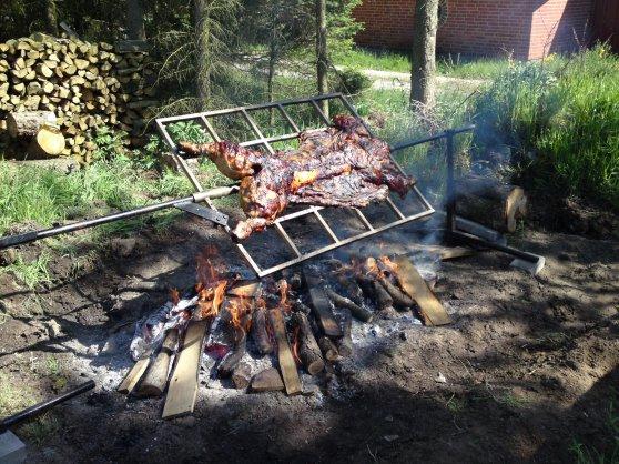 pattegris grill til salg